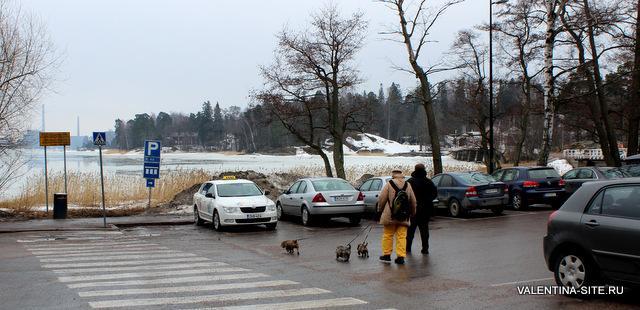 Хельсинки. Прогулка собак
